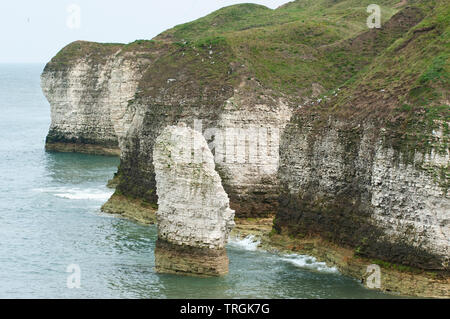 Flamborough Head, showing chalk stack and cliffs overlooking north sea in summer, Yorkshire, United Kingdom, British Isles - Stock Image