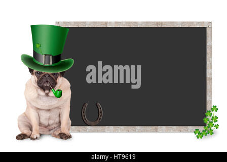 sweet smart pug puppy dog with st. patrick's day hat and pipe sitting next to blank blackboard sign with shamrock - Stock Image