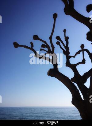 Barcelona coast tree silhouetted, El Maresme. Catalonia. - Stock Image