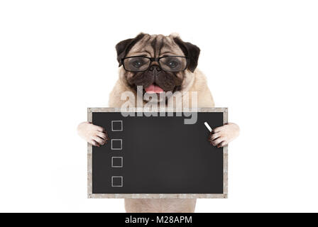 cute male pug dog puppy holding up blank checklist on blackboard with check boxes drawn with chalk, isolated on - Stock Image