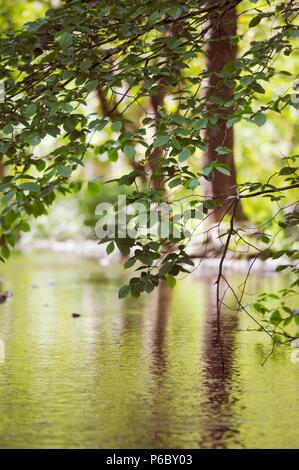 Reflected trees and spring foliage in a slow moving river, Wales, UK. - Stock Image