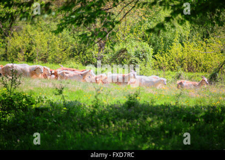 Herd of goats running more trees and shrubs. - Stock Image