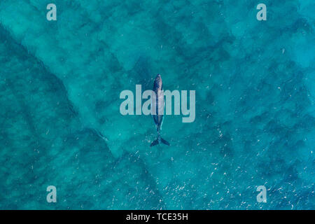 Aerial view of a whale, Australia - Stock Image