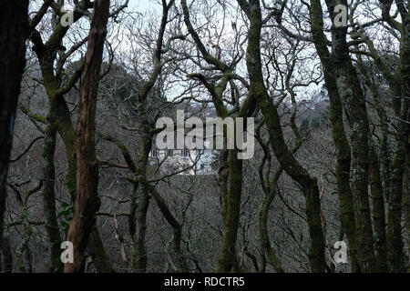 A house seen through winter woods in Cornwall, UK - Stock Image
