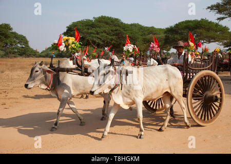Cart with oxen festivity dressed, Old Bagan village area, Mandalay region, Myanmar, Asia - Stock Image