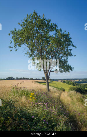 Looking South from the East Ridge of the Stonor Valley towards Henley-on-Thames, Oxfordshire - Stock Image