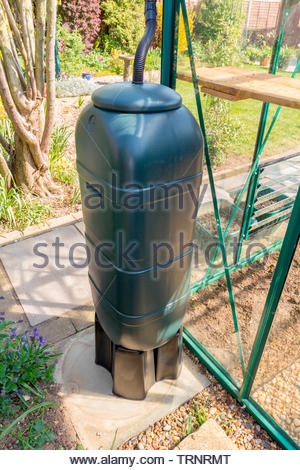 Slimline water butt for use in small spaces - positioned at the end of a greenhouse - Stock Image