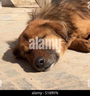 Old dog sleeping in the sun - Stock Image