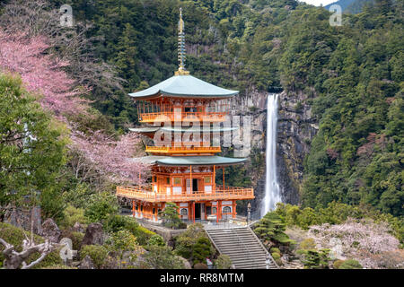 Nachisan, Japan The pagoda at Nachi fall, one of the marking points on the Kumano Kodo pilgrimage, viewed during cherry blossom season - Stock Image