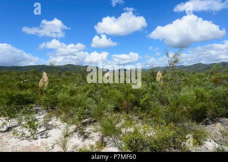 View of termite mounds in Iron Range National Park near Mt Tozer, Cape York Peninsula, Far North Queensland, FNQ, QLD, Australia - Stock Image
