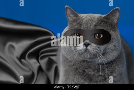 Fat cat in superhero mask - Stock Image