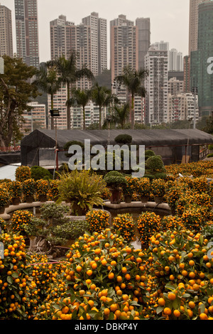 happy valley cemetry hong kong - Stock Image
