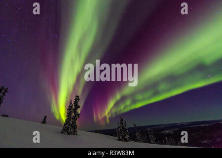 Aurora borealis, Northern Lights, near Fairbanks, Alaska - Stock Image
