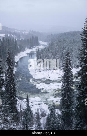view over a river, forest in the winter - Stock Image