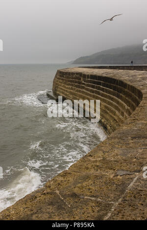Stormy misty weather in Lyme Regis, Man walking and seagull flying into winds with waves crashing against the Cobb Harbour, Dorset, England, Europe. - Stock Image