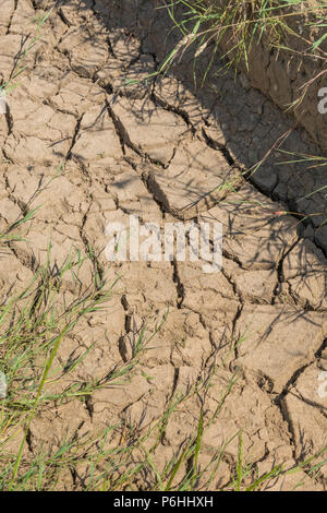 Dry water channel at field edge. Metaphor water shortage, German drought, possible famine, heatwave concept, heatwave crops, gardening in heatwave - Stock Image