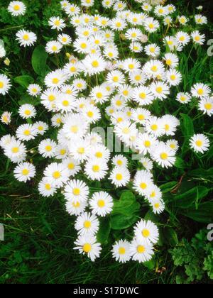 Daisy chain - Stock Image