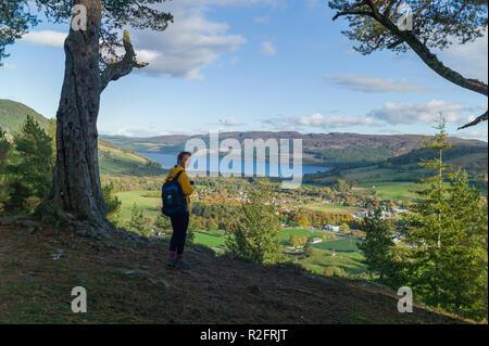 Balmacaan woodlands near Drumnacrochit, with loch ness behind. Scotland - Stock Image