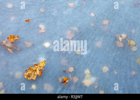 fallen autumn leaves on ice patterns in frozen pool / pond / lake surface with thousands of tiny ice bubbles - Stock Image
