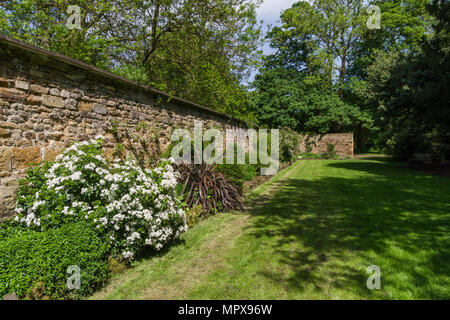 A Spring border against an old stone wall in the gardens of Delapre Abbey, Northampton, UK - Stock Image
