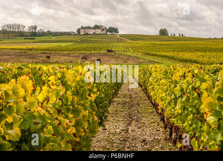 South West France, PDO wine Sauternes vineyard, chateau Yquem and its vineyards, First Growth 'Premier cru superieur classe'. Mandatory credit: Yquem castle - Stock Image