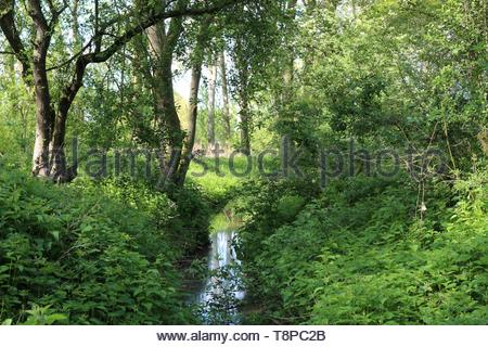 Sunlight shining through the trees highlighting two trunks that are reflecting in a calm milky water - Stock Image