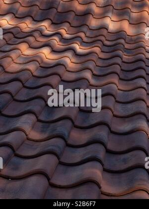 Pantiled roof typical of Norfolk, England. - Stock Image