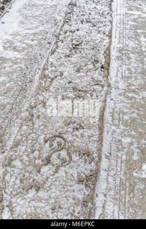 Snow dusted horse tracks / hoof prints in frozen mud. - Stock Image