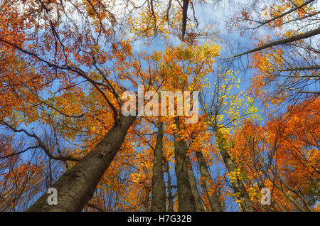 Colors of the forest in autumn in Tuscany,Italy - Stock Image