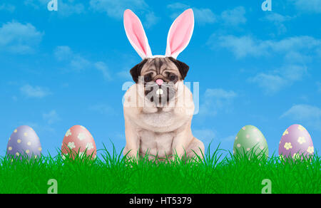 cute pug puppy dog sitting in grass wearing bunny ears diadem, next to colorful pastel easter eggs, blue sky background - Stock Image
