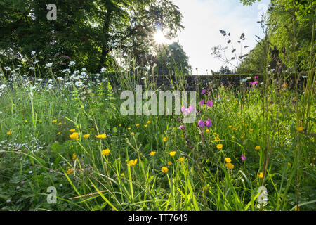 Teesdale, County Durham, UK.  15th June 2019. UK Weather.  After days of heavy rain which caused flooding in many parts of the UK the sun breaks through illuminating a wild flower garden in Middleton-in-Teesdale. Credit: David Forster/Alamy Live News - Stock Image