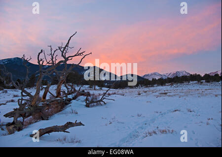 Rocky Mountain National Park, sunset, winter, Landscape, snow, fallen tree - Stock Image