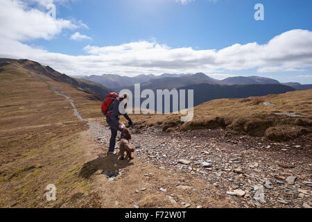 A hiker and their dog walking down Hindscarth Edge with Dale Head in the distance, English Lake District, UK. - Stock Image