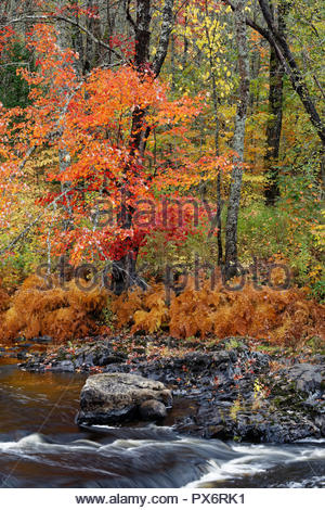 Fall colors on the West Branch of the Union River, Amherst, Maine - Stock Image