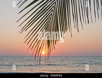A palm leaf at sunset on a beach - Stock Image