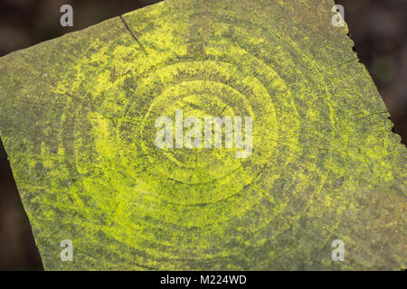 Macro photo of the concentric circles of the mildewed end of a fencing pole . - Stock Image