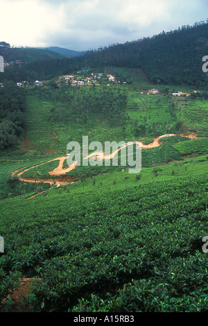 crop of tea plants on the Nilgiri Mountains in Coonoor Tamil Nadu Southern India with road leading up hill and village - Stock Image