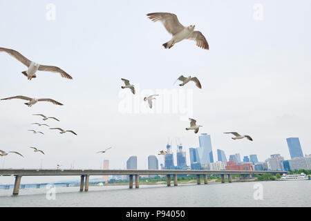 Seagulls flying with buildings in the background in Seoul, South Korea. - Stock Image