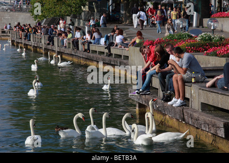 Switzerland, Zurich, lakeside, swans, people, leisure - Stock Image