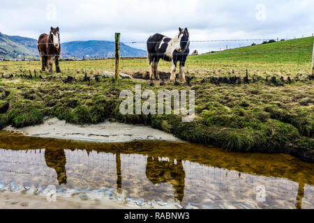 Maghera, County Donegal, Ireland. 3rd January 2019. Horses are reflected in the beach on an overcast day on the north-west coast Credit: Richard Wayman/Alamy Live News - Stock Image