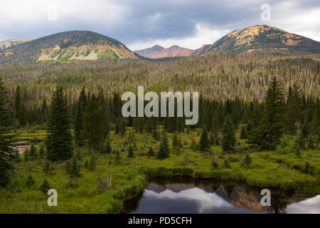 Pond in grassy field, backed by evergreen forest, and  Colorado Rocky Mountain vista in background. Good for background, text. - Stock Image
