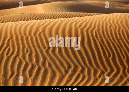 Sand dune in the Arabian desert, Dubai, United Arab EmiratesDubai, United Arab Emirates - Stock Image