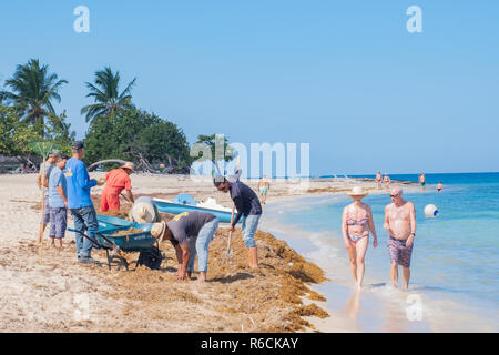 Workers clean seaweed from a beach in Cuba while tourists stroll by in the clear water. - Stock Image