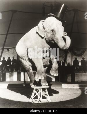 Elephant wearing top hat performing on stool in circus - Stock Image