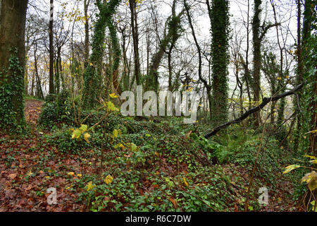 Autumn Woodland Scene - Stock Image