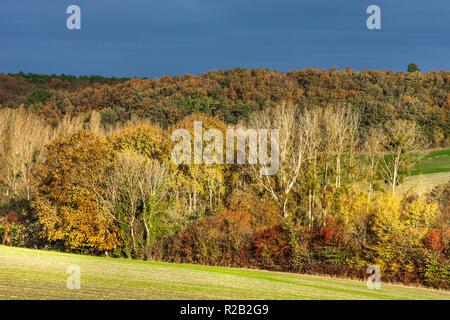 Poplar trees in Autumn landscape, France. - Stock Image