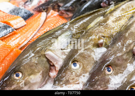 Fresh cod and salmon on ice for sale at Billingsgate Fish Market in Poplar in London - Stock Image