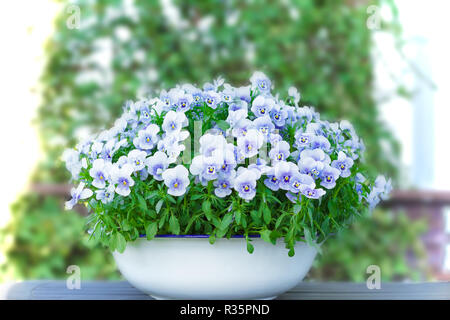 Pansy flowers in shades of lilac, violet and blue in a white vintage wash basin or pot on a balcony table, copy or text space - Stock Image