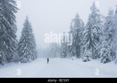 Winterwanderung am Morgen im Harz, Torfhaus, Deutschland - Stock Image