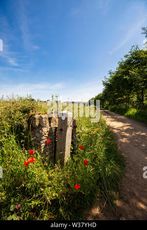 Red Poppies along the Bridleway in the Cotswolds - Stock Image